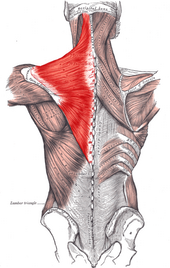 Neck and shoulder pain combo match made in hell los angeles beverly hills chiropractorneck pain ccuart Image collections