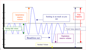 explain the importance of the change in minute ventilation with exercise Exercise, we will examine ventilation of the  ventilation can change considerably depending  breathing during in a one minute period of time.